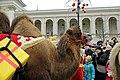 Wielbłąd (12108303664).jpg