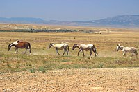 Wild Horses Ute Tribal Park Colorado.jpg