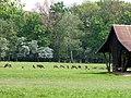 Wildpark Lzg. Großgehege.jpg