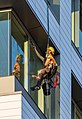Window cleaner on a new building on Douglas - Pandora St, Victoria, British Columbia, Canada 13.jpg