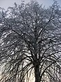 Winterimpressionen-rauhreif-2008-007.jpg