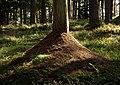 Woliński Park Narodowy mrowisko 2016-08-25 p.jpg
