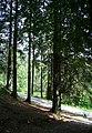 Woodland on Tom Heights - geograph.org.uk - 846773.jpg