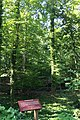Woodwild Park, Metuchen, NJ - forest and sign.jpg