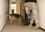 Working Dogs Get Training DVIDS25740.jpg