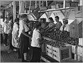 World War I Farmerettes Pack Peaches on a Virginia Fruit Farm in August, 1917 (3904008968).jpg