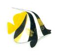 XRF-Heniochus chrysostomus.png