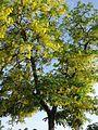 YELLOW TREE.jpg