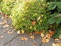 Yellow.flowers.2097.jpg