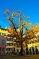 Yellow Tree hanging in Blue Blue sky Zurich - panoramio.jpg