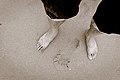 (283-365) My feet (6060651146).jpg