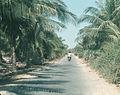 Đường Mũi Né ngày xưa (9941722455).jpg
