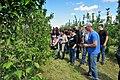 Вирощування яблуні 4.jpg