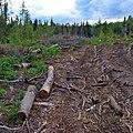 Вырубка леса, Чердынский район - panoramio.jpg