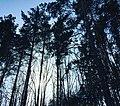 Гуляя по лесу.jpg