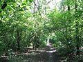 Дендрологічний парк 10.jpg