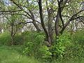 Дендрологічний парк 277.jpg