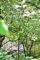Дубовий гай з природною водоймою в Києві. Фото 2.jpg