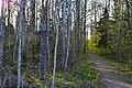 Ладожский мемориальный лесопарк 2.jpg