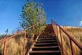 Лестница на вершину кургана - panoramio.jpg