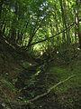 Лісовий струмок.jpg
