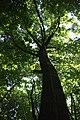Ліс Трахтемирова.jpg