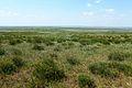 Оренбургская степь - panoramio (5).jpg