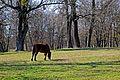 Парк в П'ятничанах P1200232.jpg