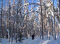 Петровское. На лыжне. - panoramio.jpg