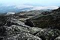 Природен парк Витоша – PP01 – Платото - No15.jpg