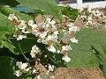 Растения в Седово 243.JPG