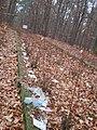 יער נחציולי, רודנה, או גלוגוב. קברי נרצחי השואה - מיהודי ז'שוב או לונצט (1).jpg