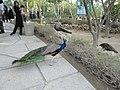 باغ پرندگانGarden Birds - panoramio.jpg