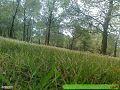 غابات امجدل.jpg
