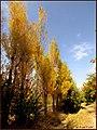مناظر پاییزی باغات مراغه - panoramio.jpg