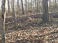 दांडेली जंगल.jpg