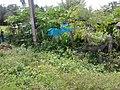 บ้านสวนศรีสงคราม ตำบล สร้างนางขาว - panoramio (2).jpg