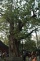 中國山西太原古蹟B388.jpg