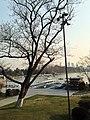 南京玄武湖出租船 - panoramio.jpg