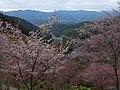 吉野山 下千本 2013.4.03 - panoramio (1).jpg