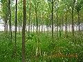 含山县含城西郊小树林景色 - panoramio (1).jpg