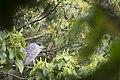夜鷺 (25458563234).jpg