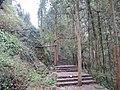 大神仙居风景区的藤绕树 - panoramio.jpg
