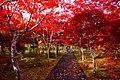 平岡樹芸センター(Hiraoka arboriculture center) - panoramio (10).jpg