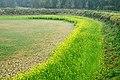 英德田园之旅 - panoramio.jpg