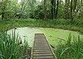 -2021-07-13 Pond full of duckweed, Taverham Mill, Norfolk.jpg