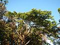 0581jfLandscapes Mabalas Diliman Salapungan Paddy fields San Rafael Bulacan Roadsfvf 13.JPG