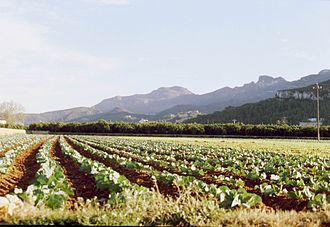 Benicull de Xúquer - A field in Benicull with the Serra de Corbera in the background