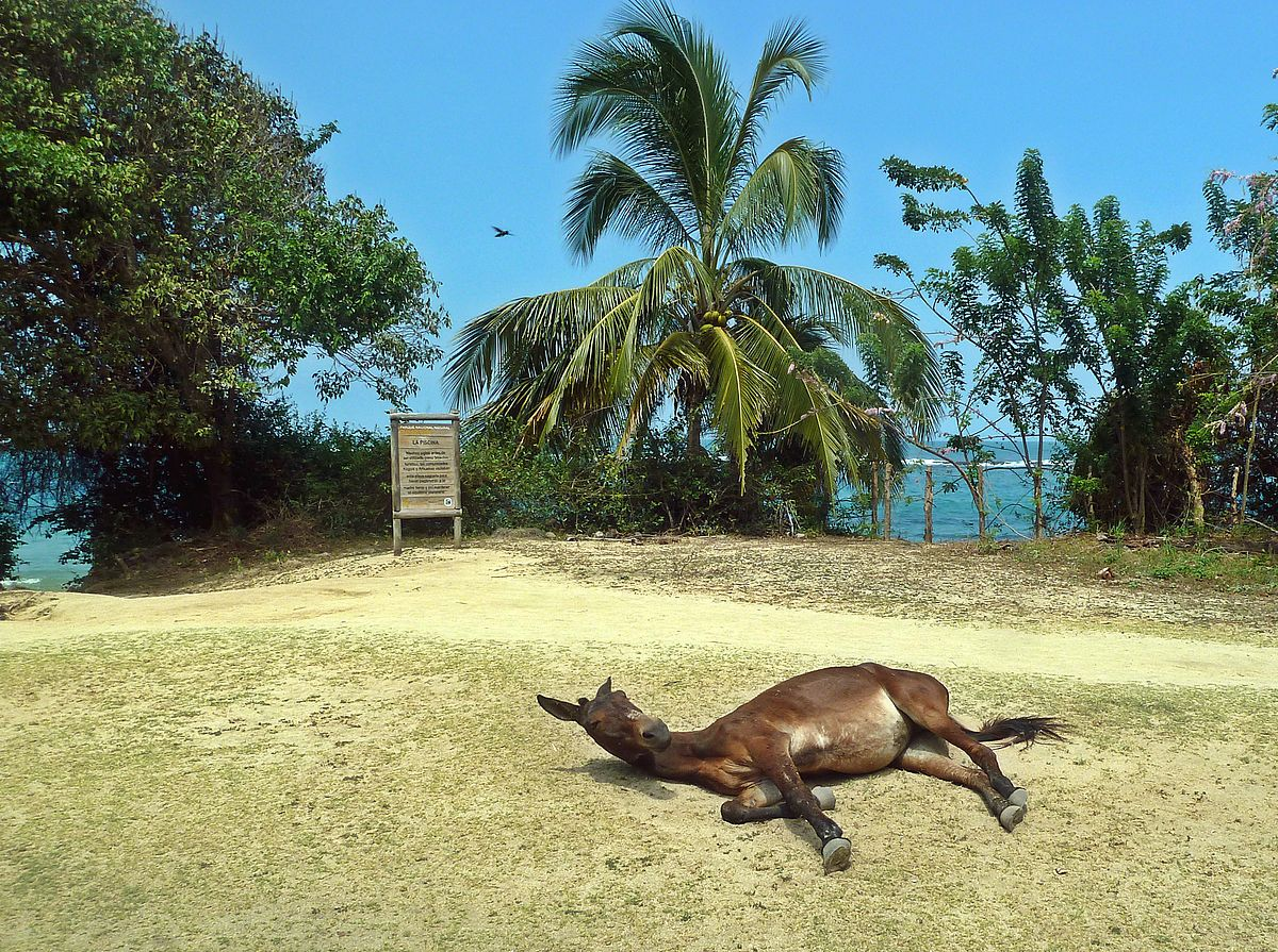 115 Tayrona Colombia Sleeping Horse.JPG