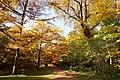 131103 Hokkaido University Botanical Gardens Sapporo Hokkaido Japan07s.jpg
